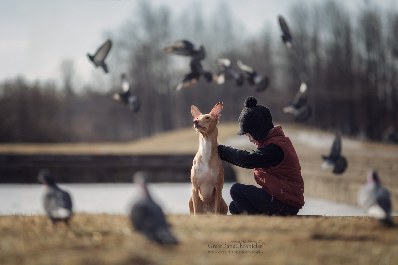 pharaoh, hound, Андрей Селиверстов