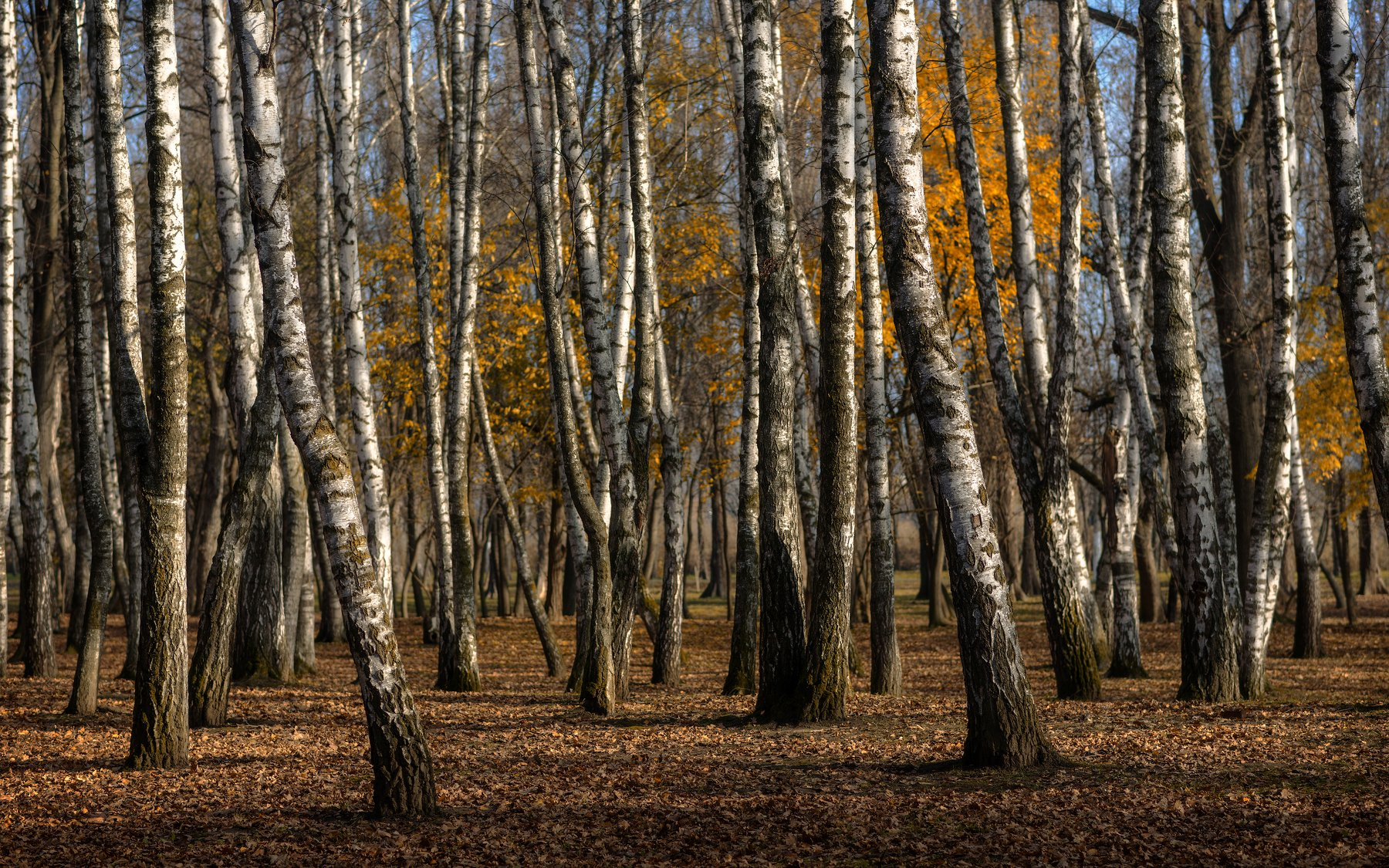 осень, в, городском, парке, Александр Плеханов