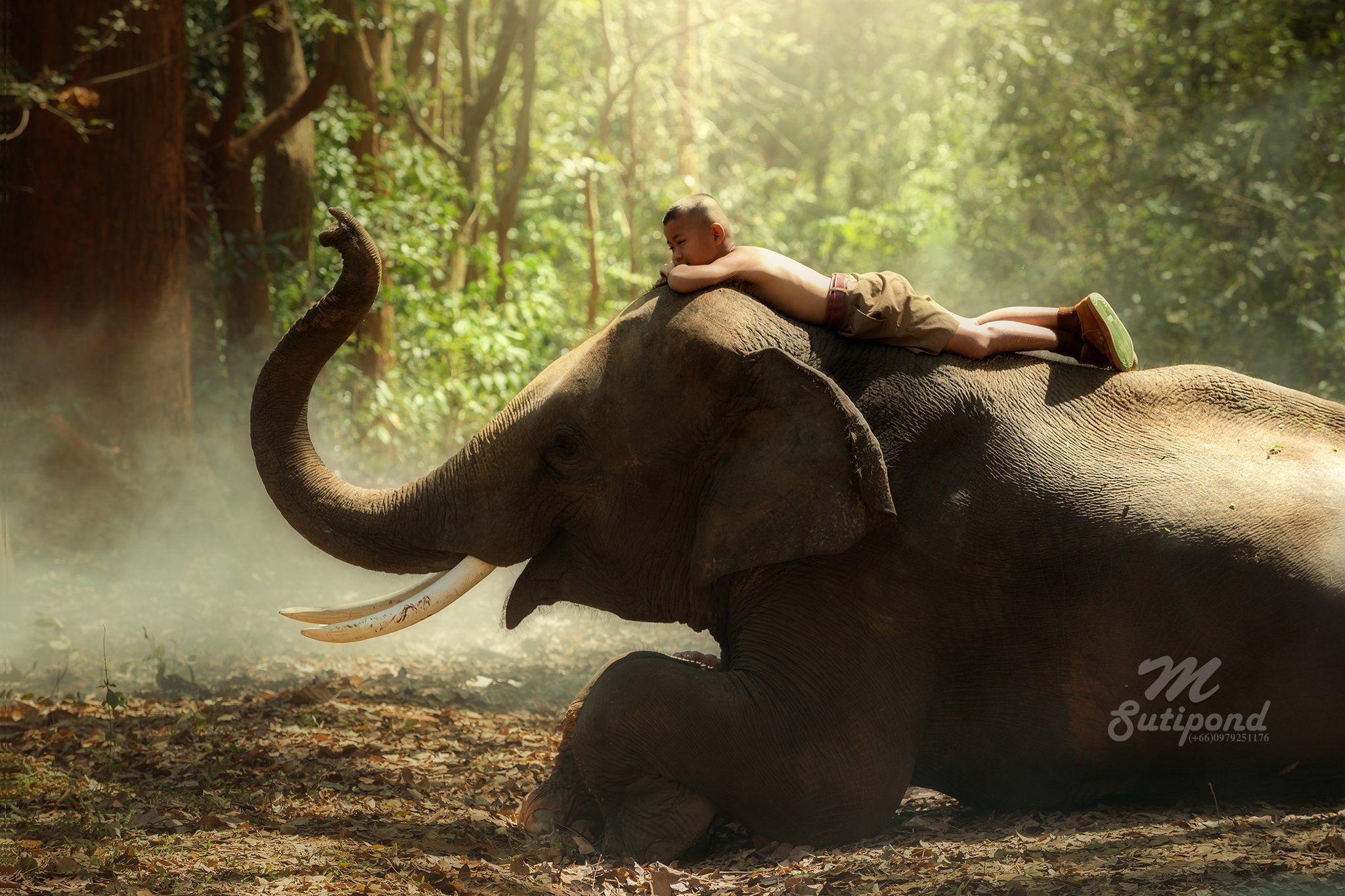 elephant,child,boy,sleep,thailand,portrait,person,, SUTIPORN SOMNAM