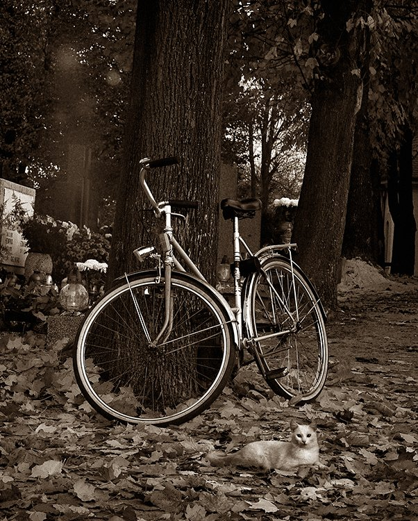 wake,cemetery,ghost,old,memory,canon,, Emerald Wake ©