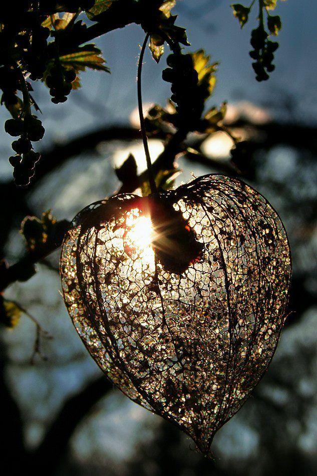 wake,macro,delicate,memory,sony,time,, Emerald Wake ©