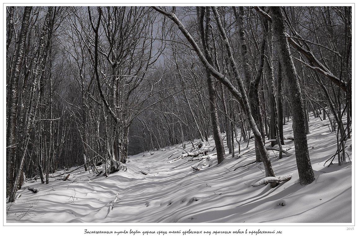 крым, апрель, весна, ай-димитрий, лес, снег, зима, анатолий покровский, Анатолий Покровский