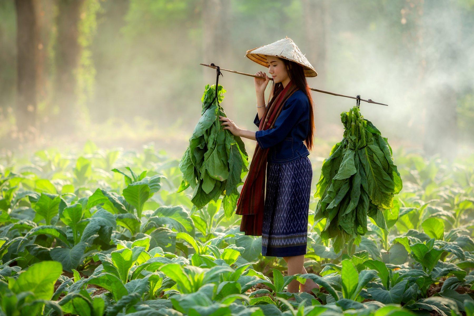 laos,woman,tobacco , SUTIPORN SOMNAM