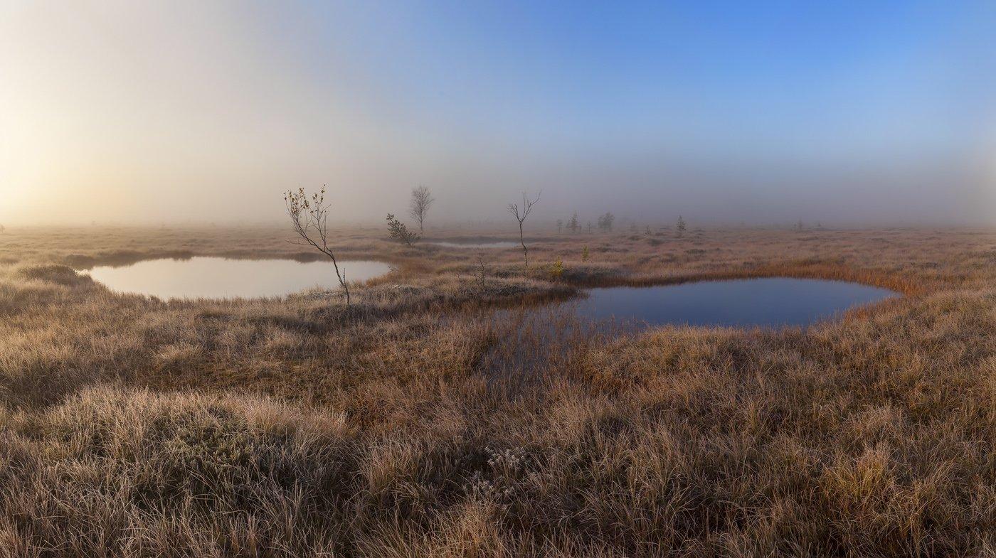 Болото, Ленобласть, Ленинградская область, туман, Арсений Кашкаров