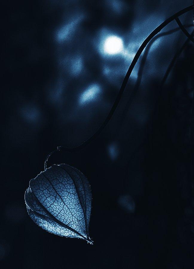 wake,macro,eleven,art,vision,sony,zeiss,, Emerald Wake ©