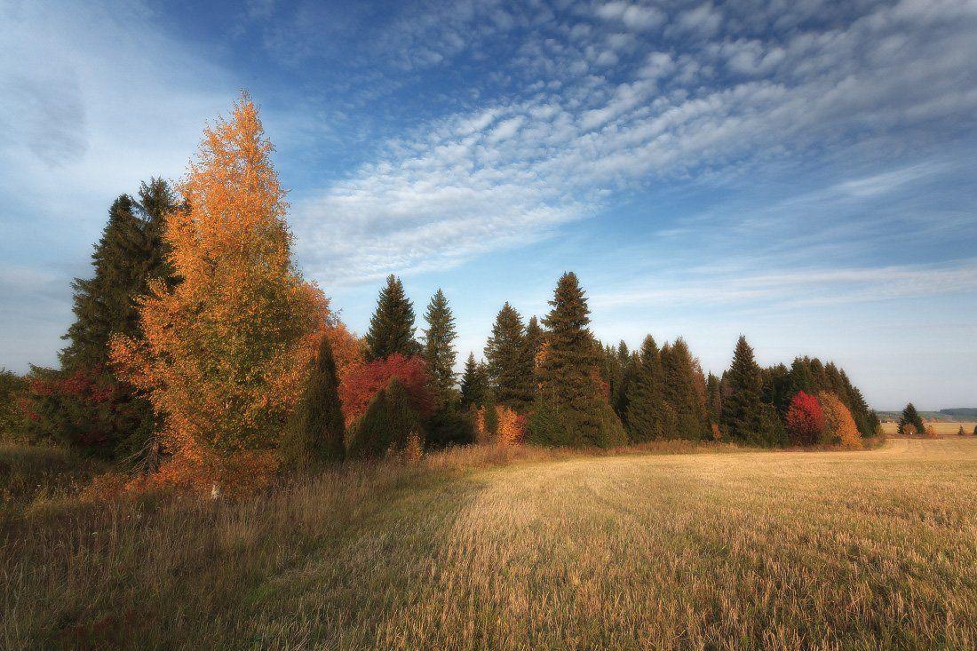 Поле трава лес краски осень облака, Георгий Машковцев