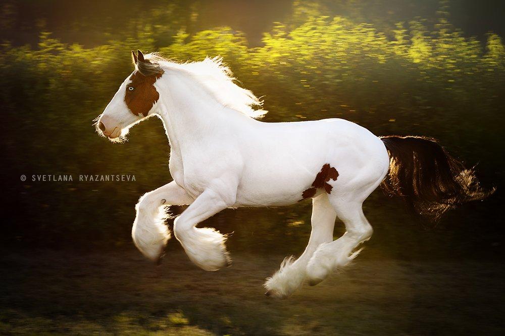 horse, run, gallop, motion, лошадь, лошади, в движении, Svetlana Ryazantseva