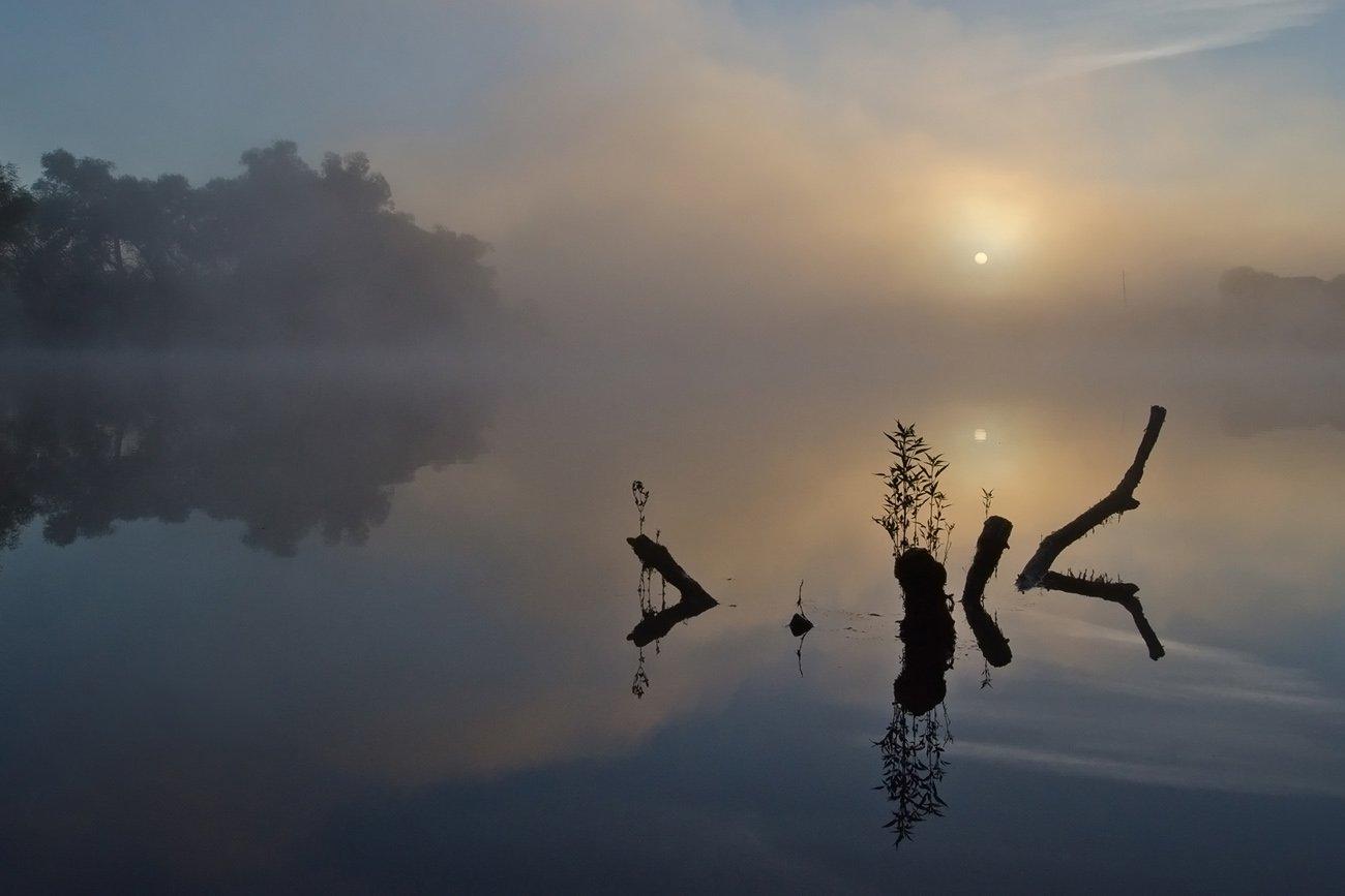 утро рассвет природа пейзаж коряги, Михаил Агеев