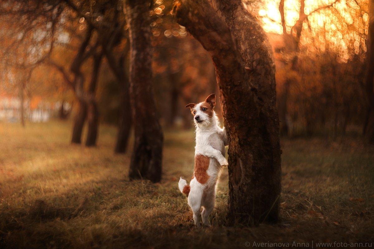 собака, природа, парк, Анна Аверьянова