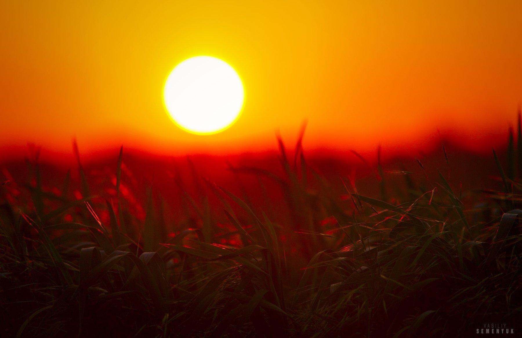 крым, солнце, поля, закат, молодая пшеница, ветер, трава, настроение., Семенюк Василий