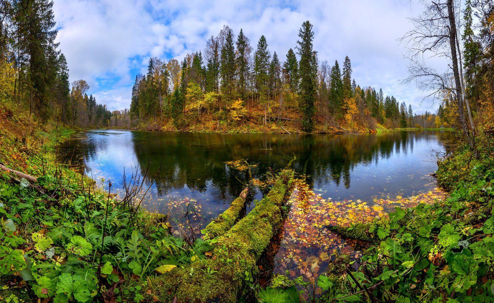 осень, берег, озеро, лес, листья, лопухи, природный заказник, ленинградская область., Лашков Фёдор