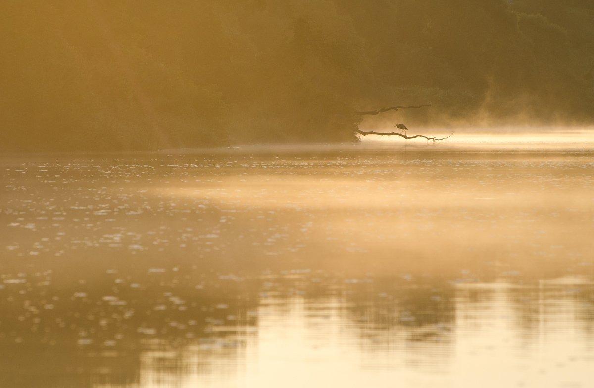 природа птица цапля река упа якшино, Михаил Агеев