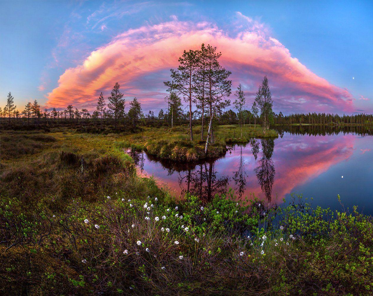 север, белые ночи, лето, озеро, сосны, облака, пушица., Лашков Фёдор