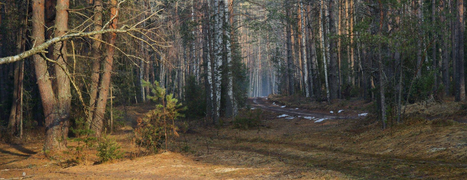 апрель лес снег утро, Дмитрий Алексеев