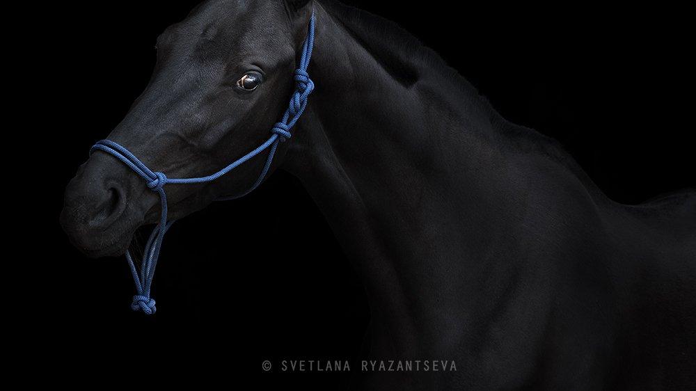 horse, black horse, black, dark, look, horses, horse head, portrait, портрет, лошадь, лошади, Svetlana Ryazantseva