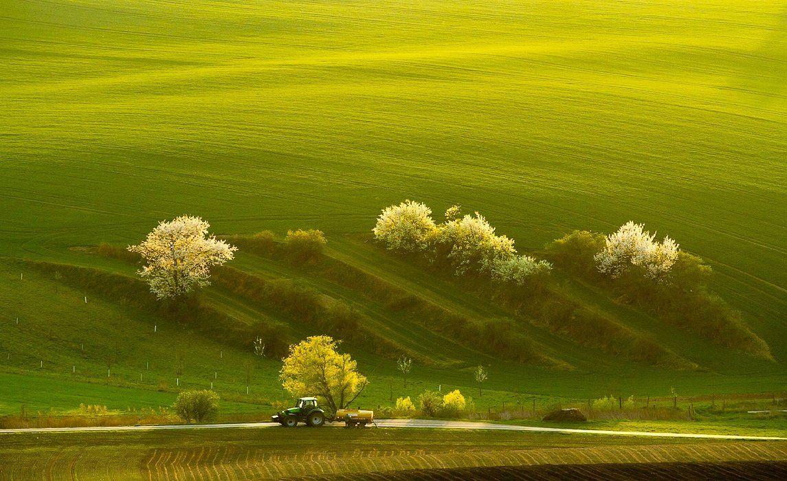 spring, tractor, field, landscape, green, František Uhler