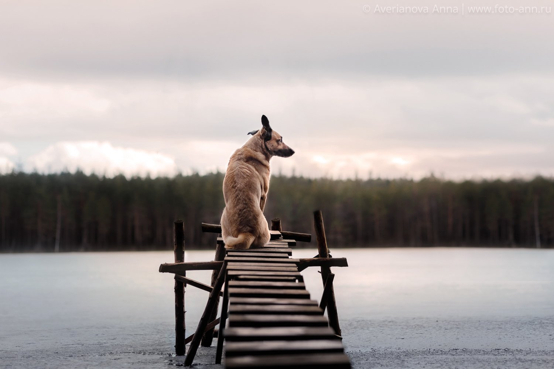 собака, природа, озеро, Анна Аверьянова
