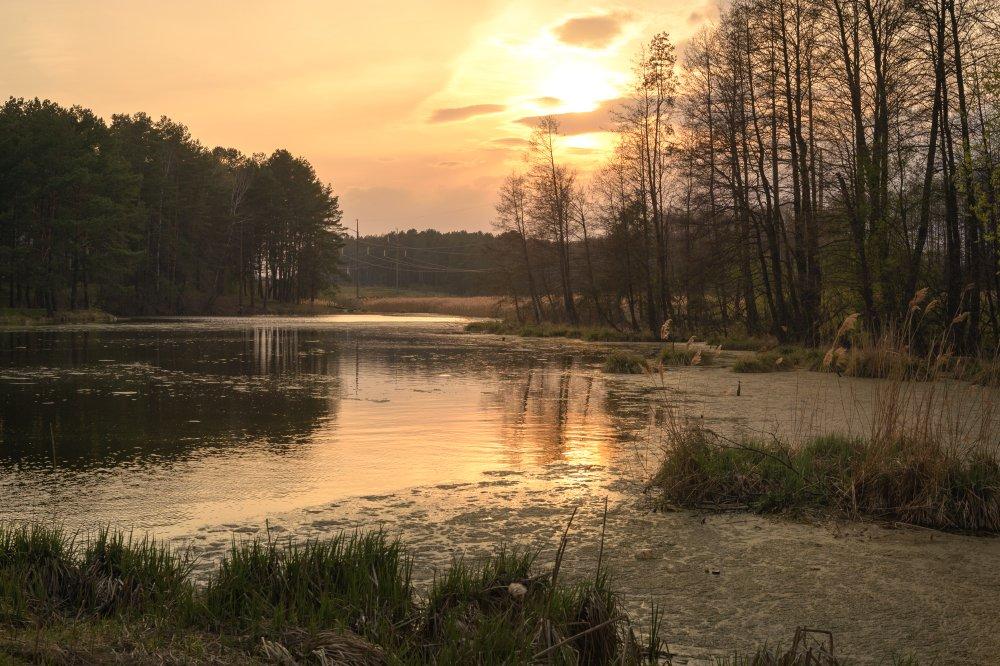 пейзаж,природа,весна,ека,лес,закат,вечер,деревья, Юлия Лаптева