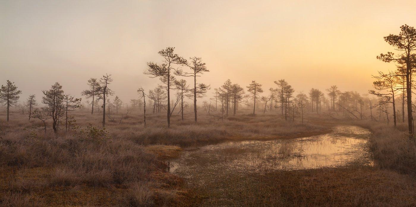 верховое болото, Ленобласть, Карельский перешеек, Ленинградская область, топи, Арсений Кашкаров