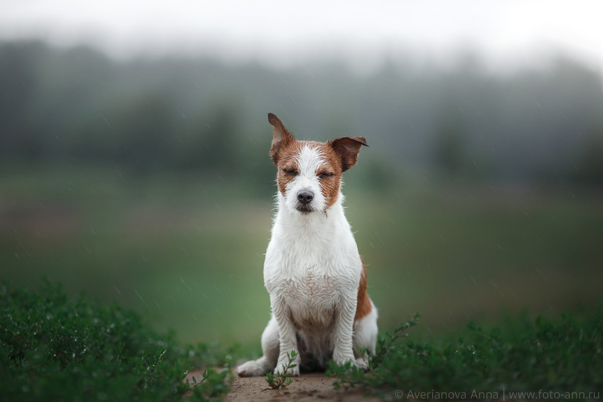 собака, дождь, природа, питер, Анна Аверьянова