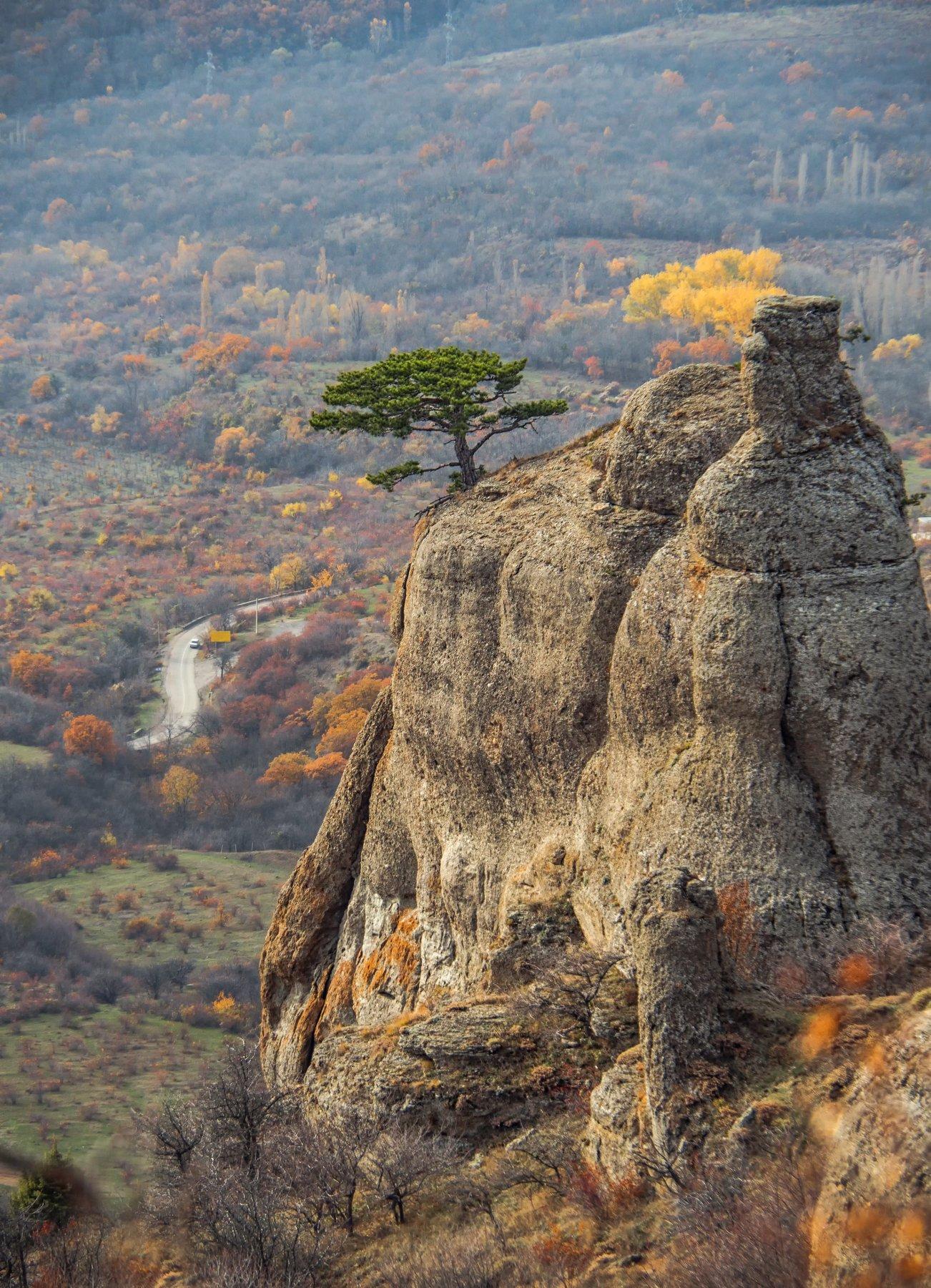 крым,демерджи,осень,золотой,желтый,зеленый,сосна,скала,гора,россия,пейзаж,высота,деревья,закат,природа, Elena Pakhalyuk