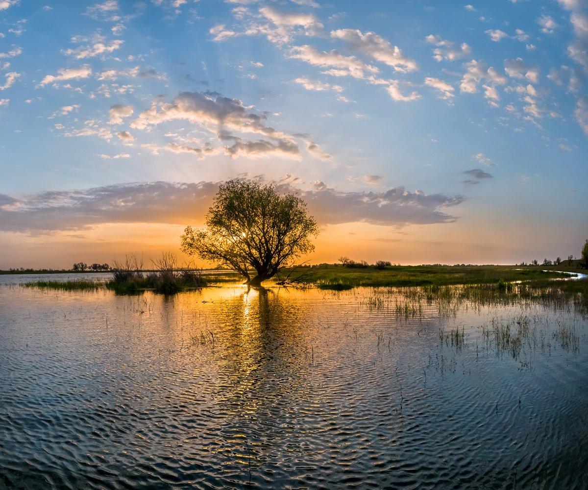 весна, половодье, астраханская область, волга, река, рассвет, дерево, облака, нерест, поволжье, вода., Лашков Фёдор