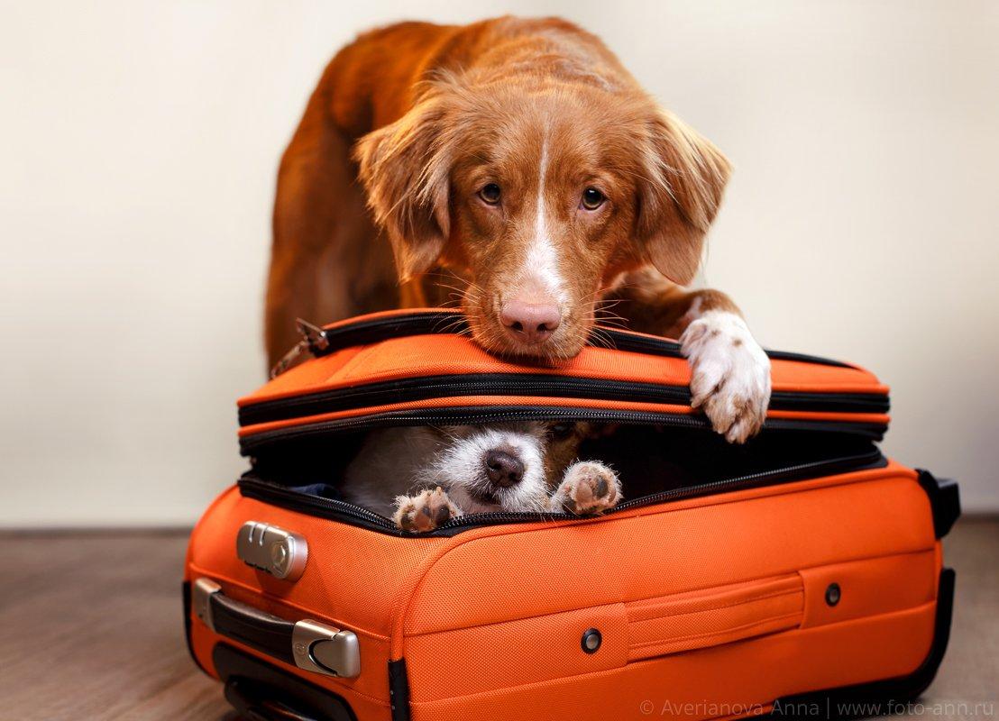 собака, путешествие , Анна Аверьянова