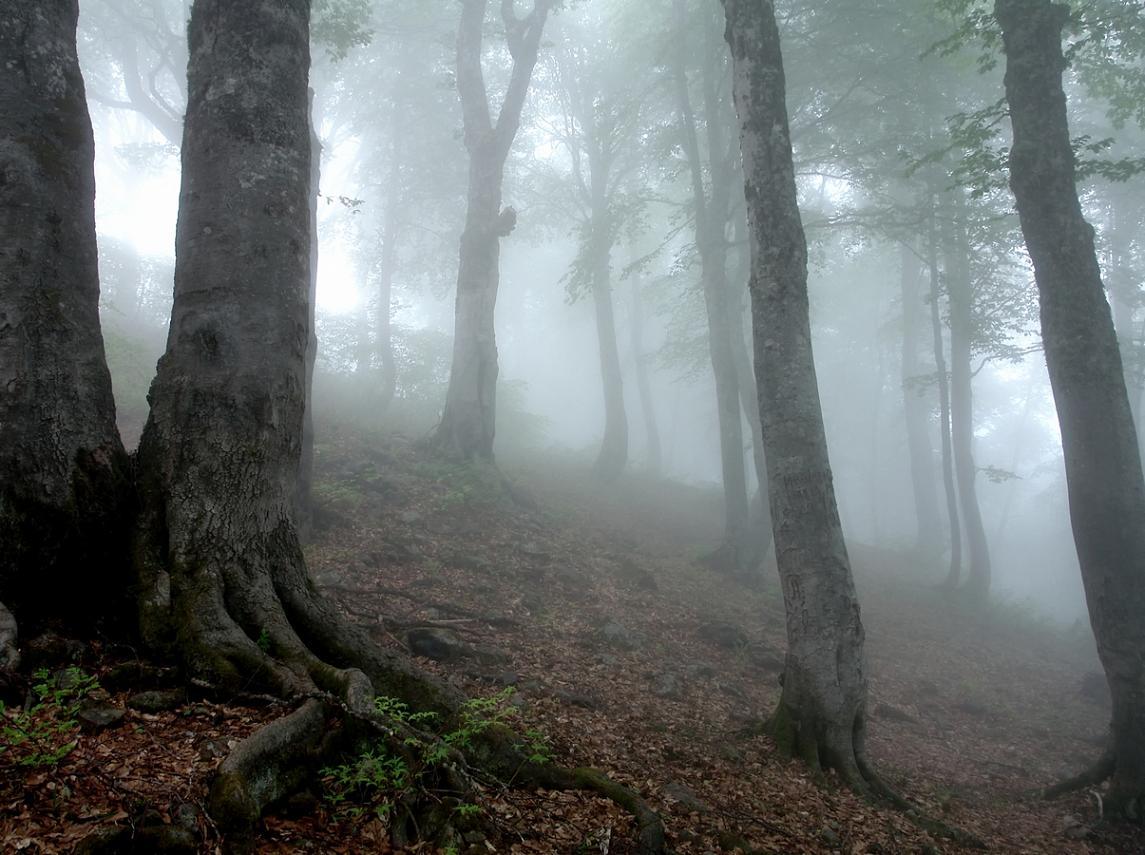 лес, тропа, туман, подъем, Вадим