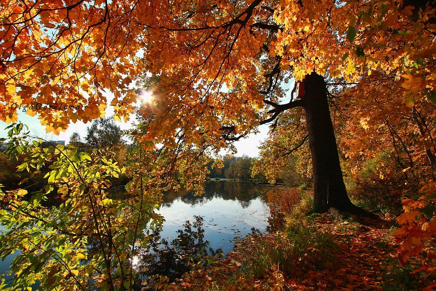 фото, парк, осень, краски, пейзаж, Ольга Горелова