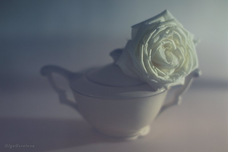 фото, натюрморт, роза, цветок, Ольга Горелова