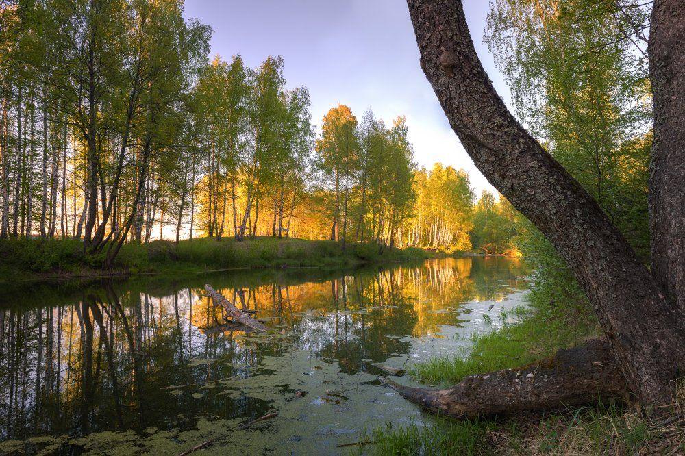 пейзаж,природа,весна,закат,вечер,отражение,березы,береовая роща,весна,лес, Юлия Лаптева