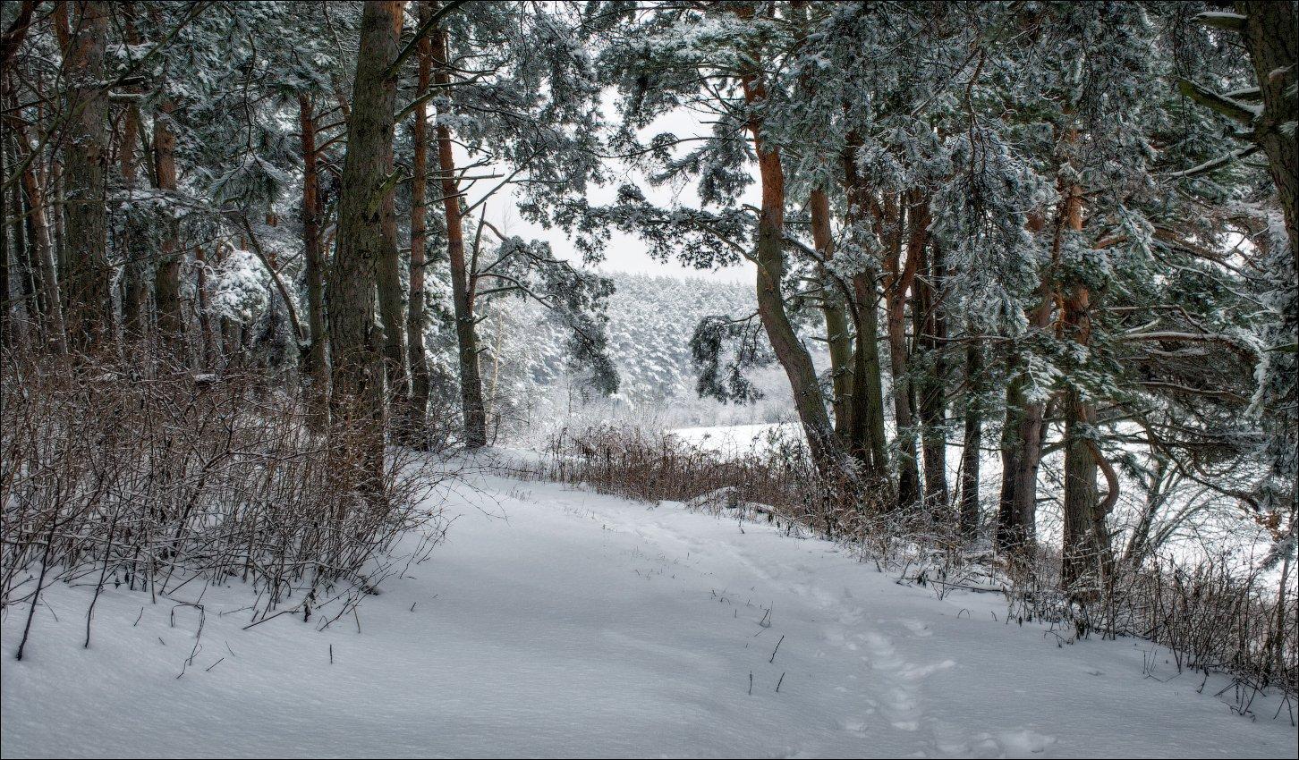 зима, снег, лес,, Сергей Шабуневич