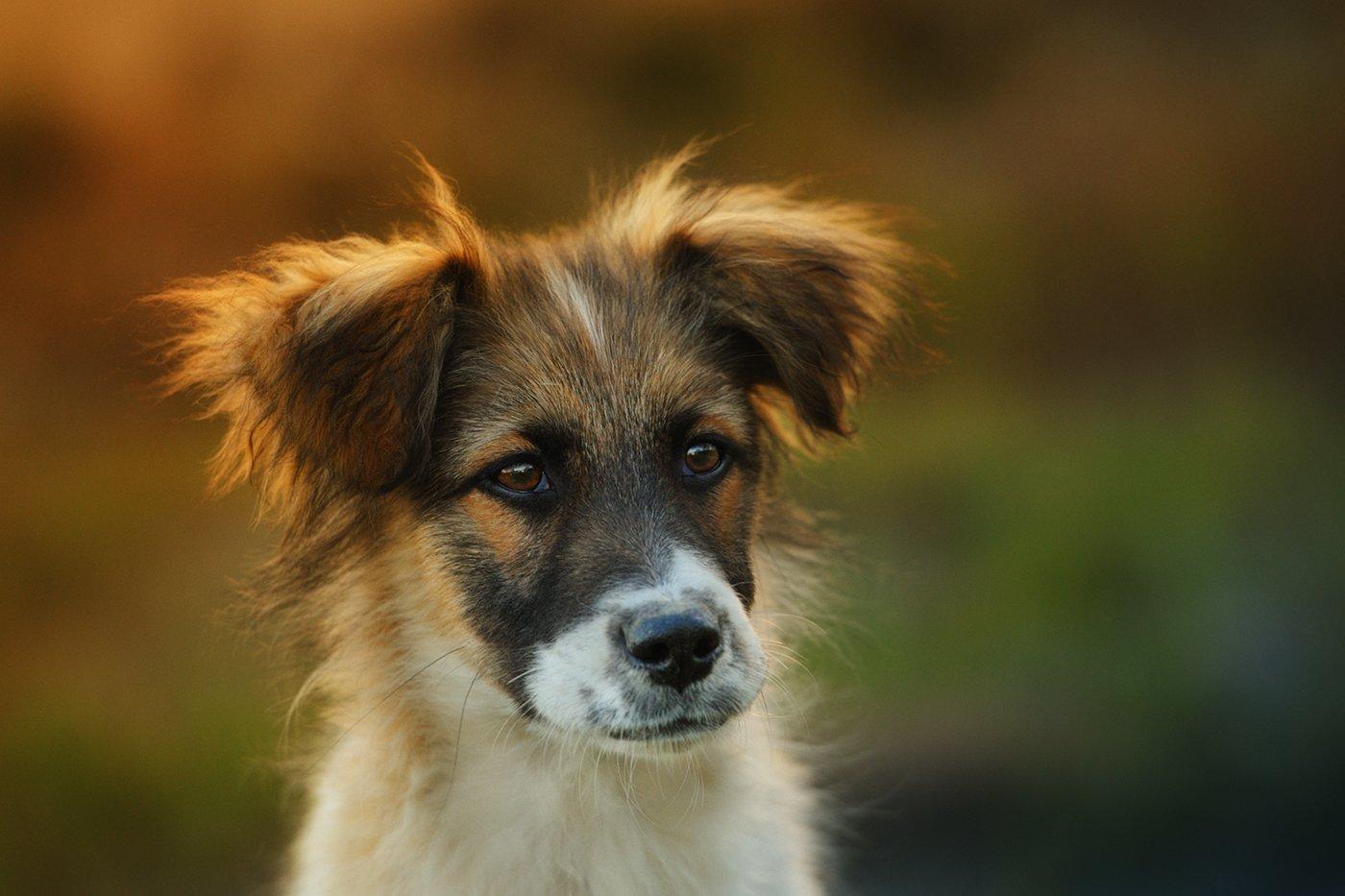 щенок, озорство, шкодливость, хулиганство, Вьюшкин Игорь