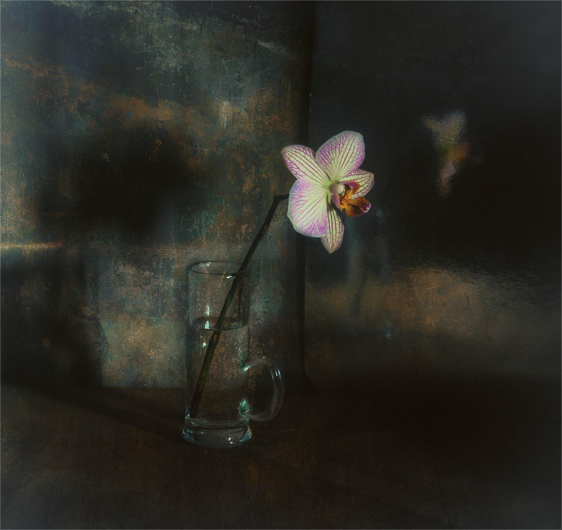 still life, натюрморт,  цветы, природа, орхидея,  винтаж, минимализм, Михаил MSH
