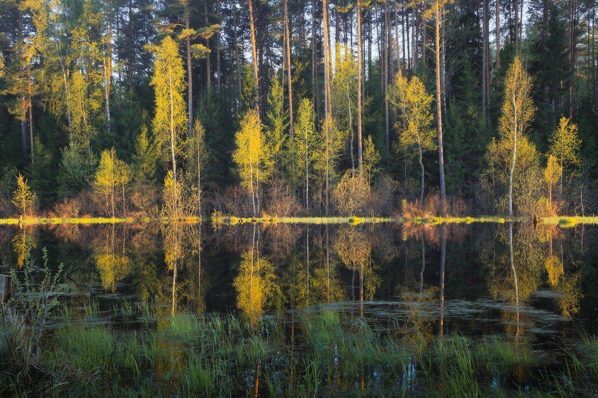весна разлив вечер свет, Дмитрий Алексеев