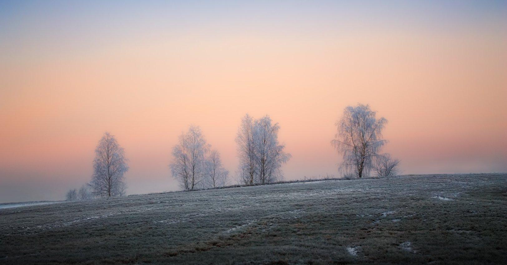 зима, рассвет, иней,, Сергей Шабуневич