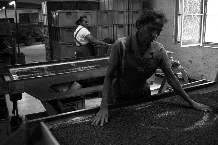 жанр, стрит, шри ланка, estet mf, sri lanka, street, genre, чайная фабрика, tea factory, Estet MF ( Mikhail Faletkin)