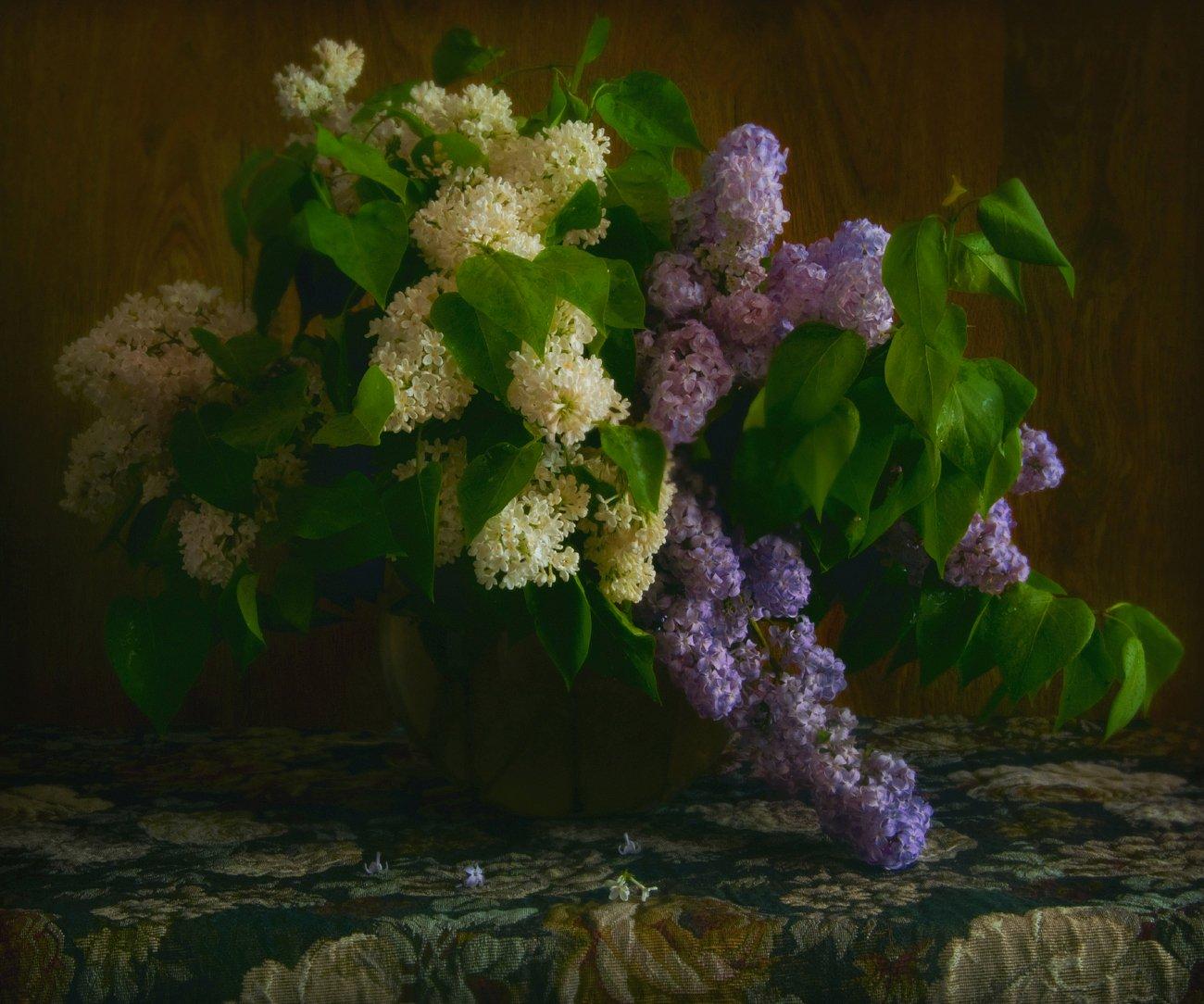 , Елена Брежицкая