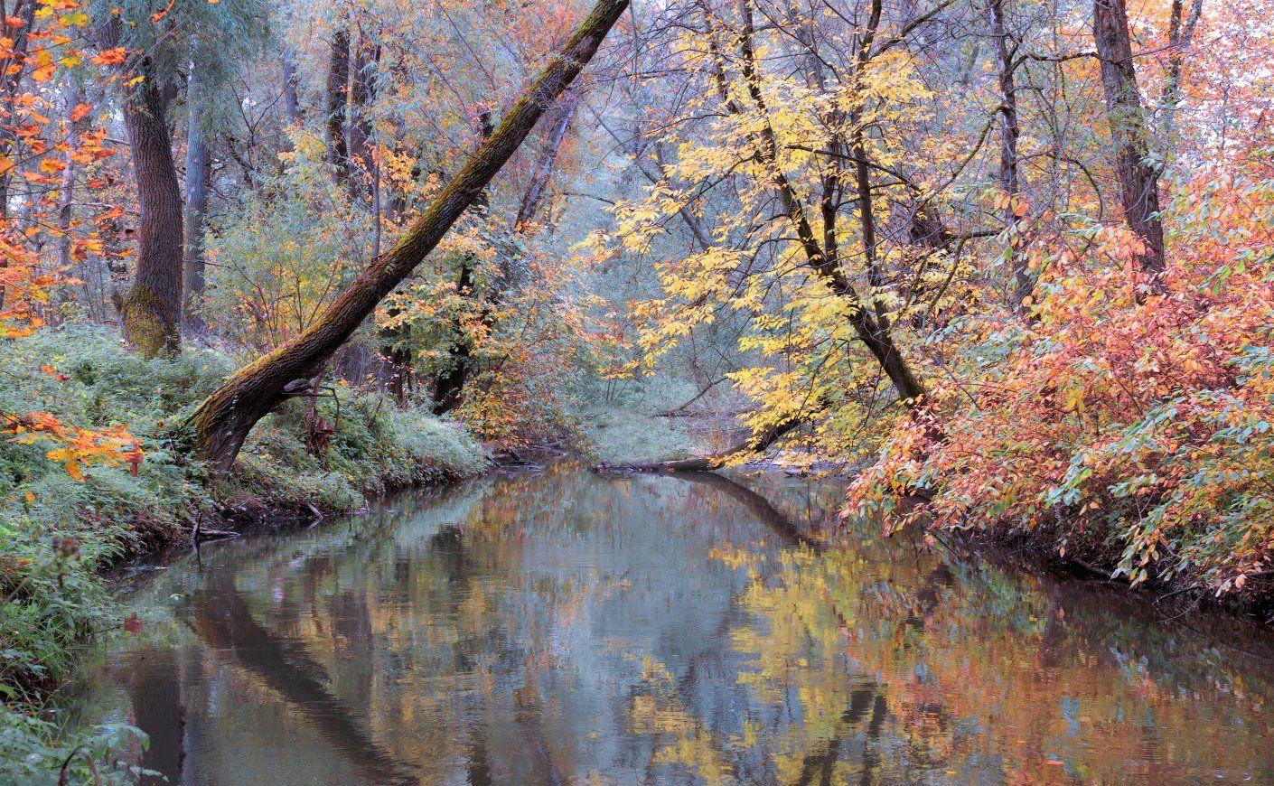 река, осень, лес, сходня, Виктор Климкин