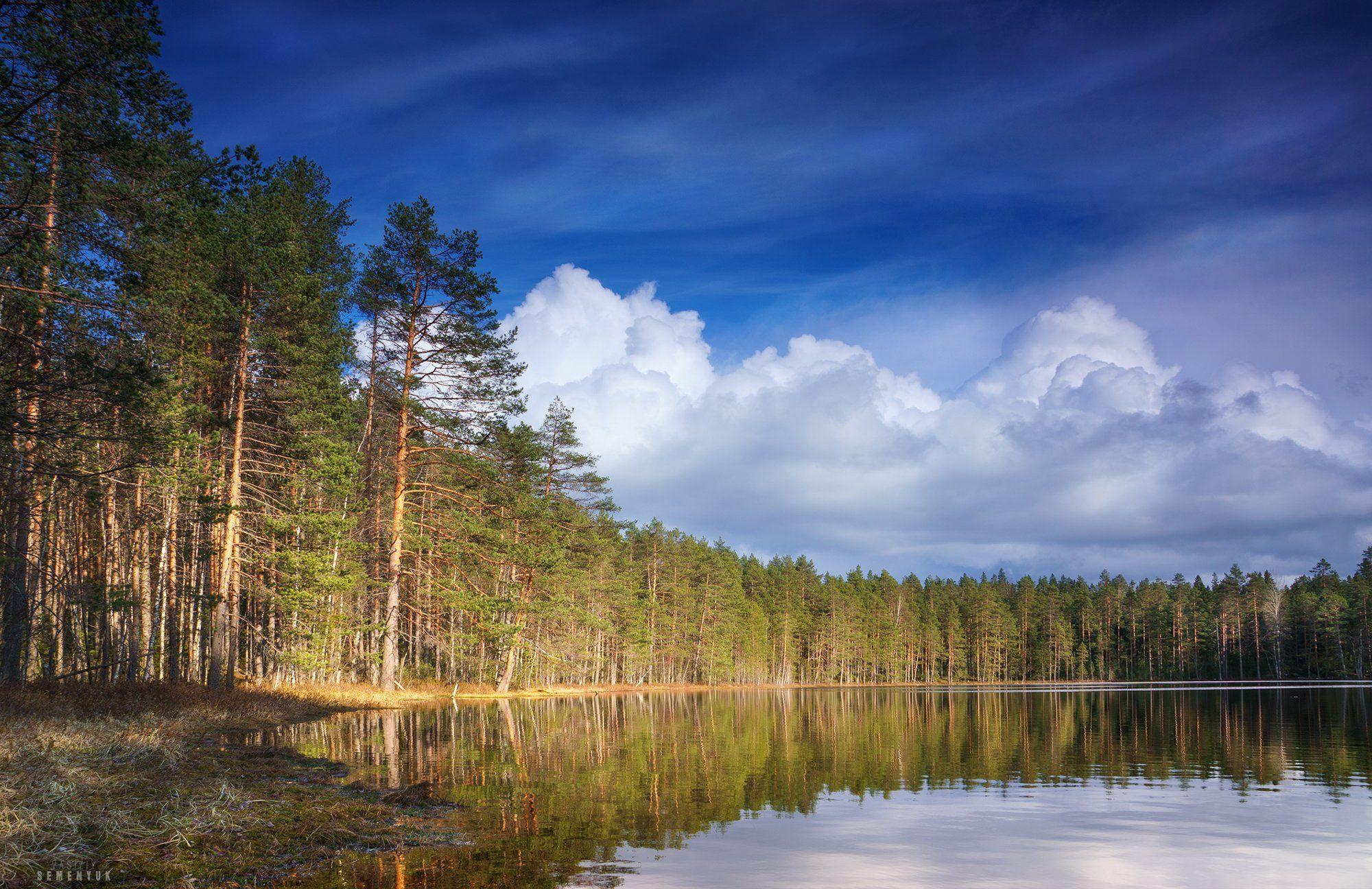 карелия, сосны, озеро, небо, облака., Семенюк Василий