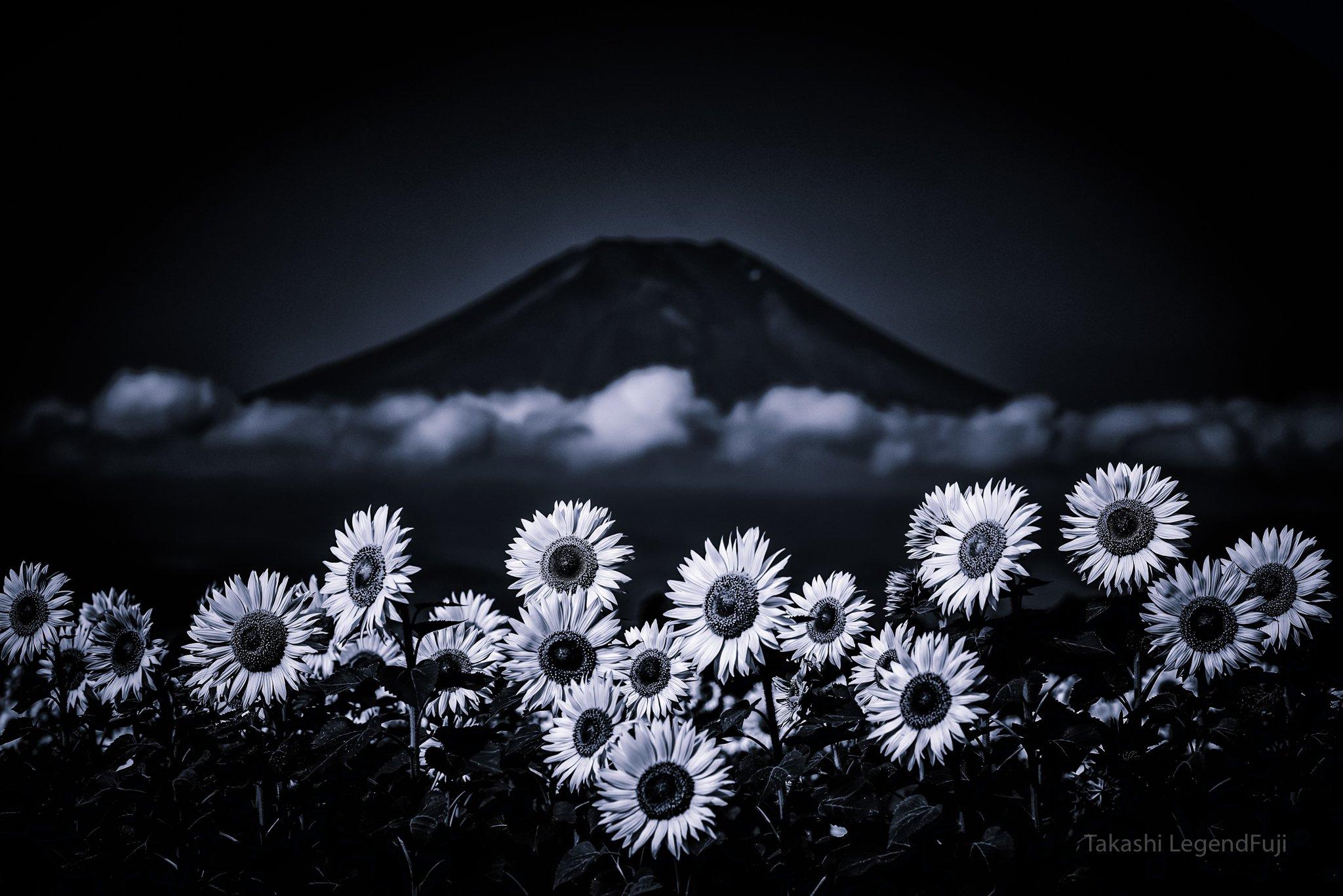 Fuji,Japan,mountain,flower,sun flower,cloud,blue,, Takashi