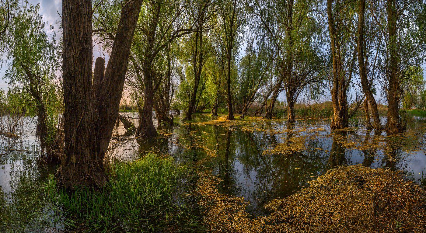 весна, река, астраханская область, рассвет, деревья, половодье, лес,, Лашков Фёдор