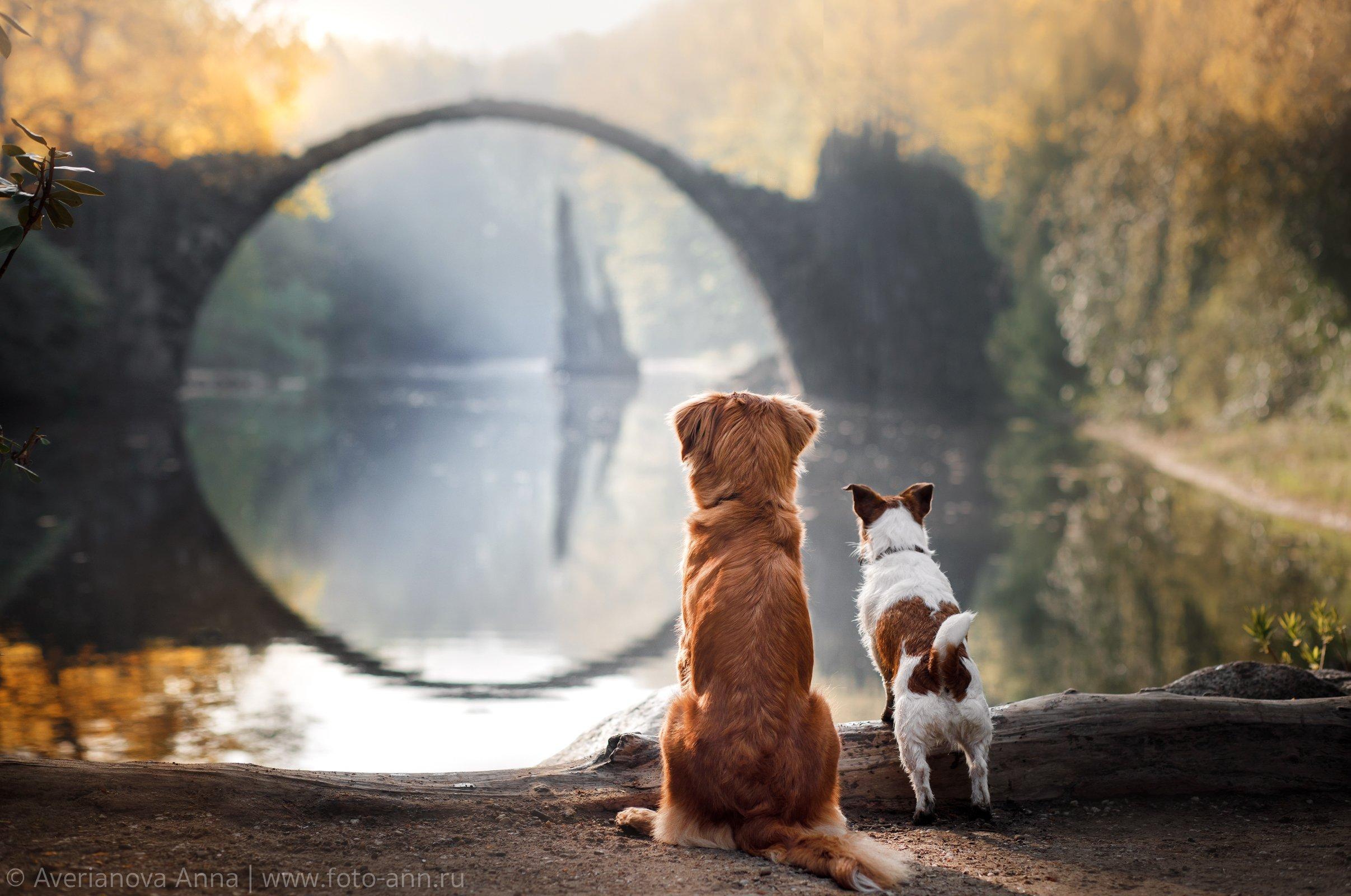 собаки, природа, мост, Германия, Анна Аверьянова