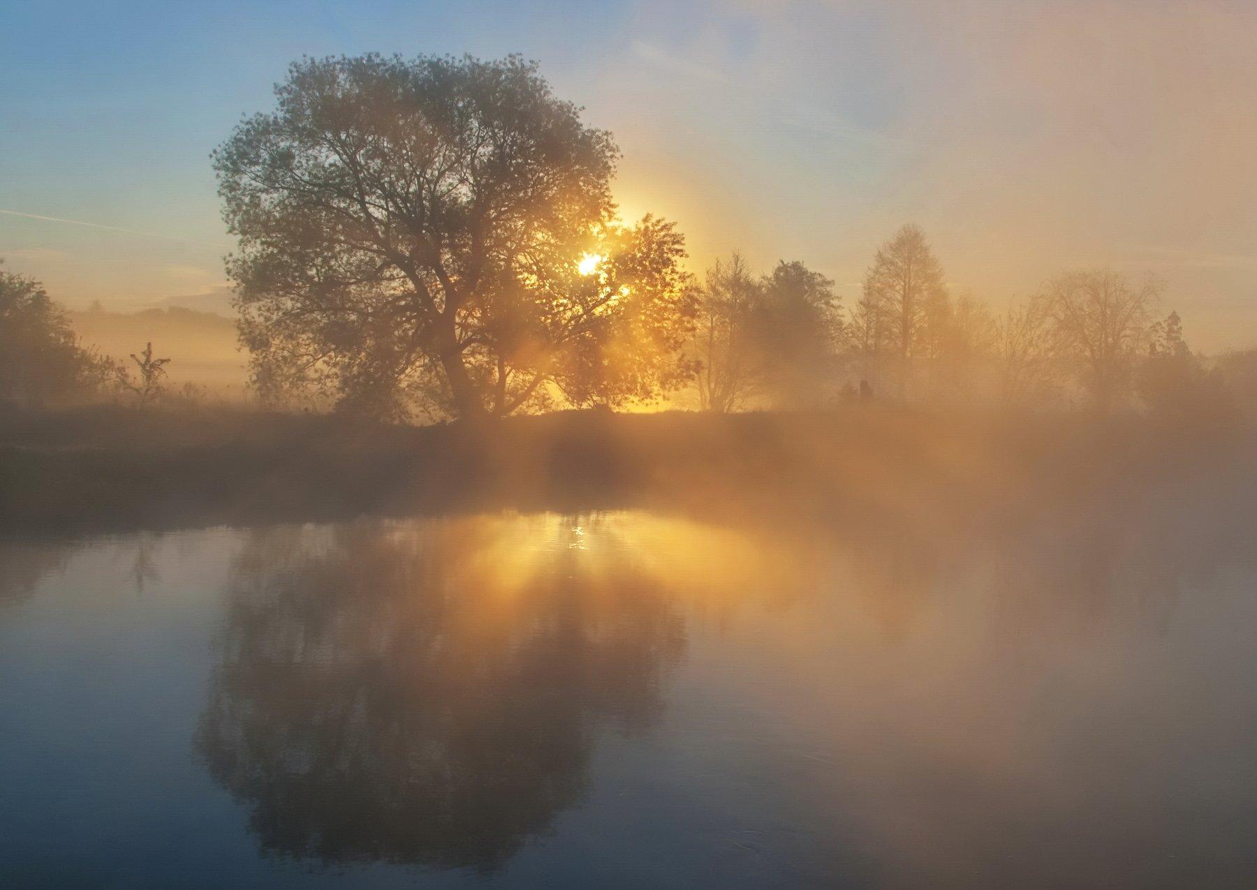 утро, туман, весна, свислочь, Александр Гвоздь