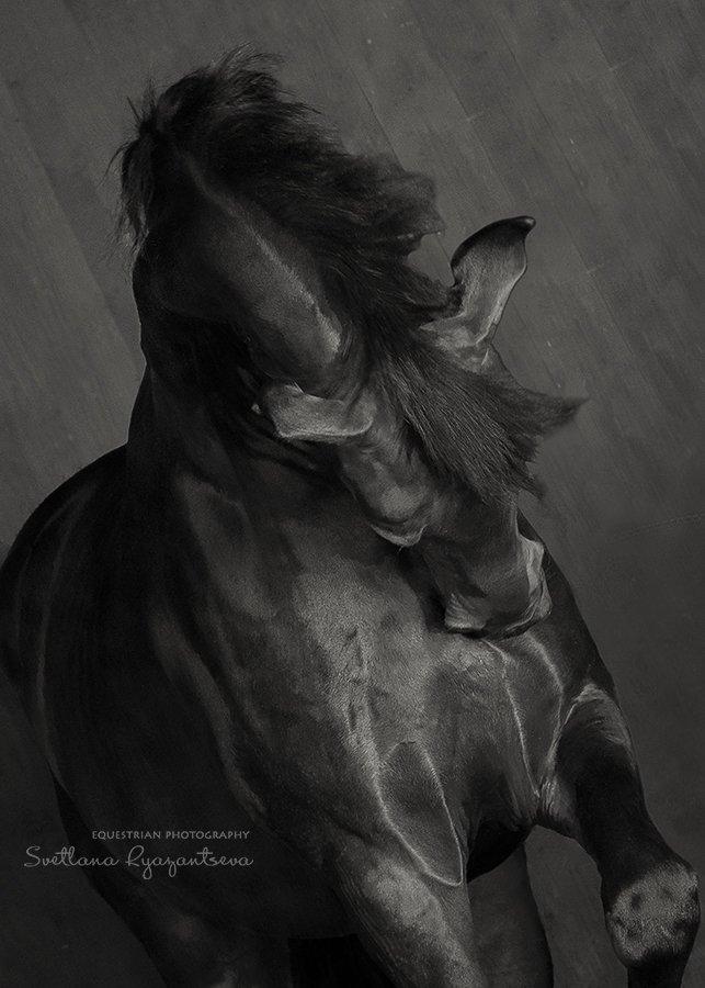 horse, black, monochrome, head, portrait, лошадь, лошади, монохром, портрет, Svetlana Ryazantseva