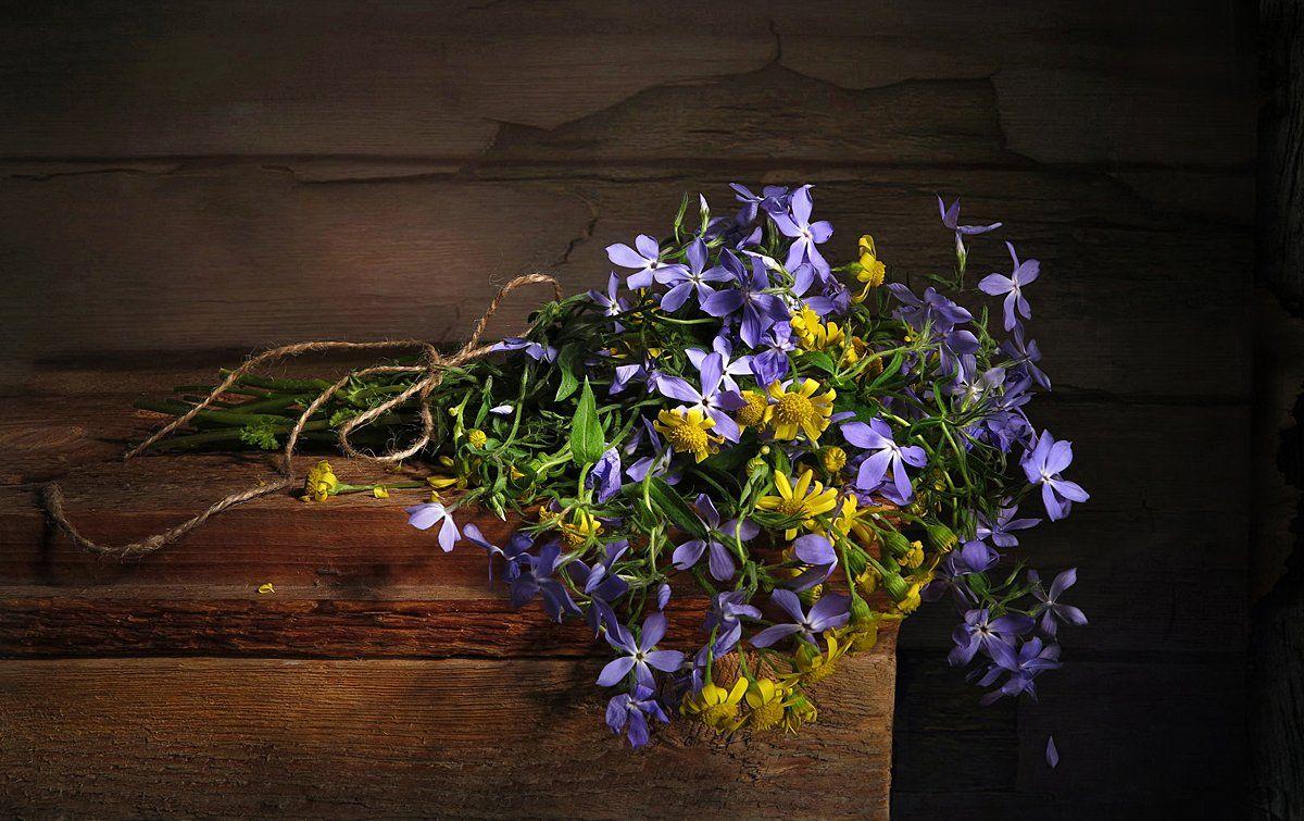 полевые цветы, Алла Шевченко