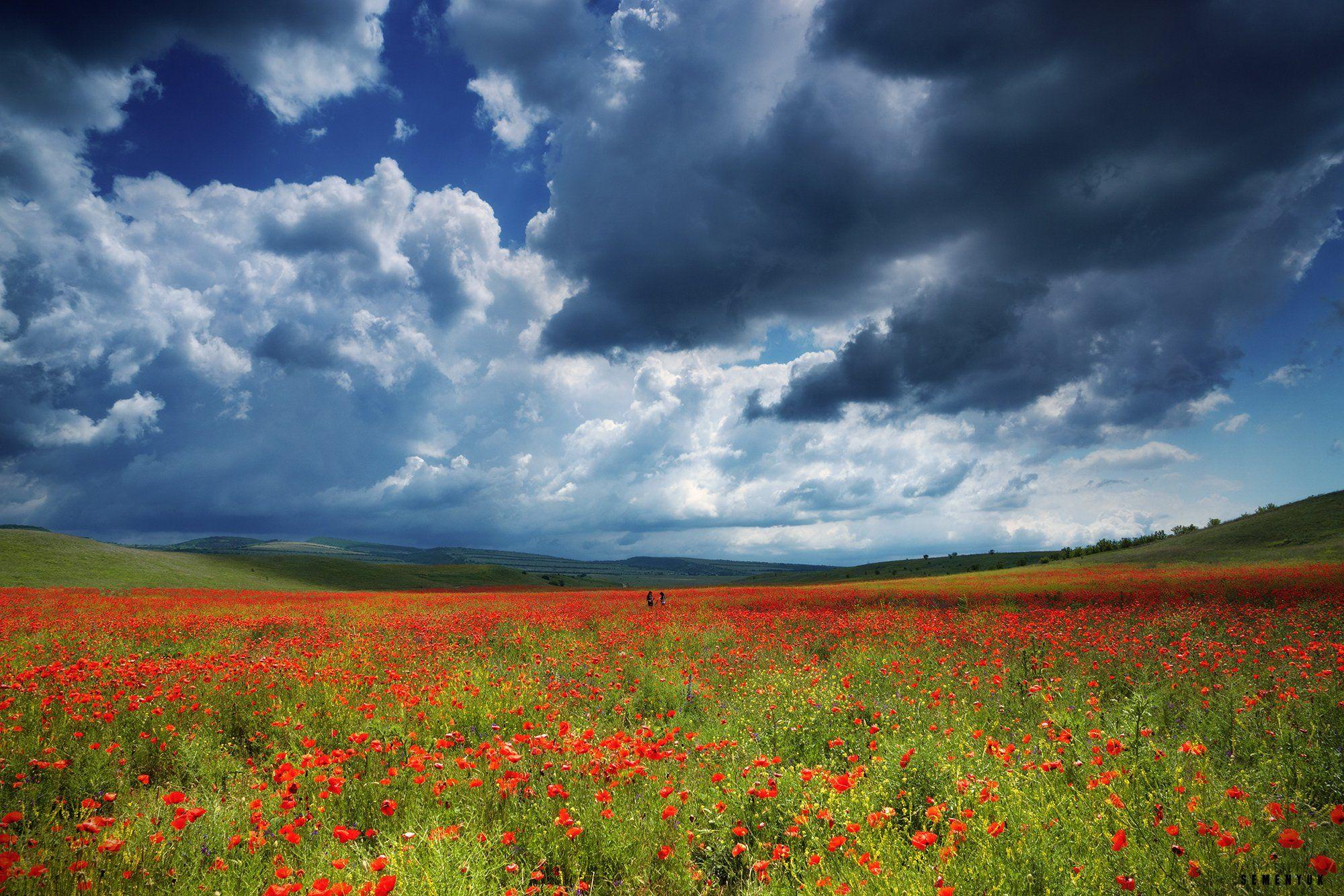 крым, маки, цветы, поле, небо, облака, люди., Семенюк Василий