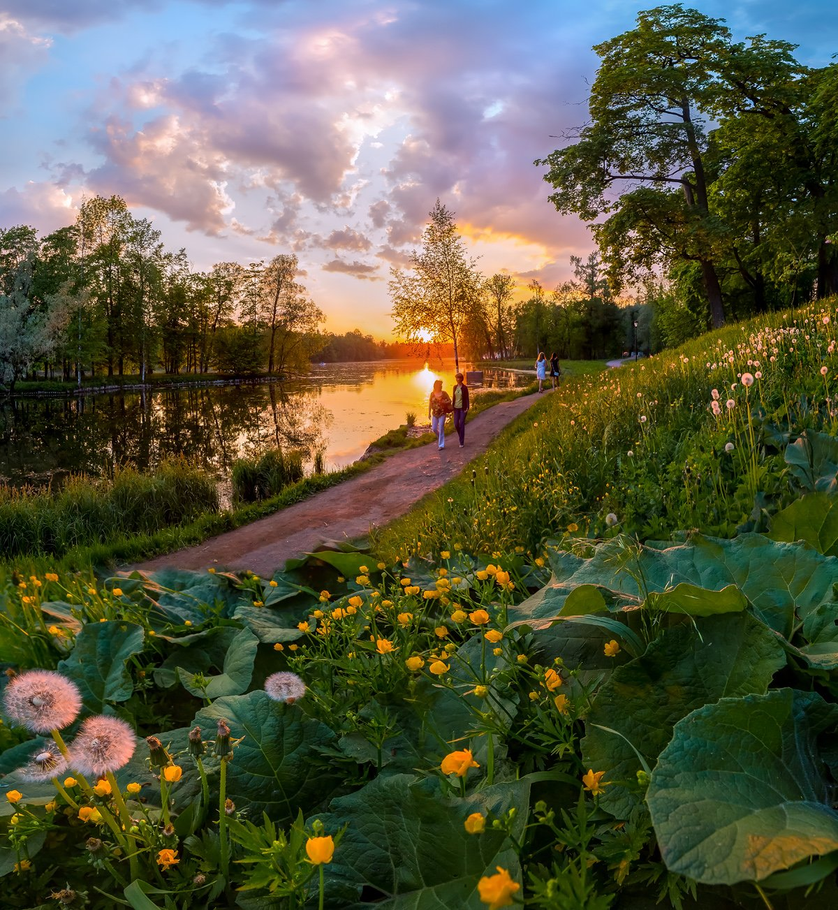 весна, парк, гатчина, цветы, закат, люди, любовь, одуванчики, лопух, лютики, пруд, деревья, тропа, дорожка, прогулка., Лашков Фёдор