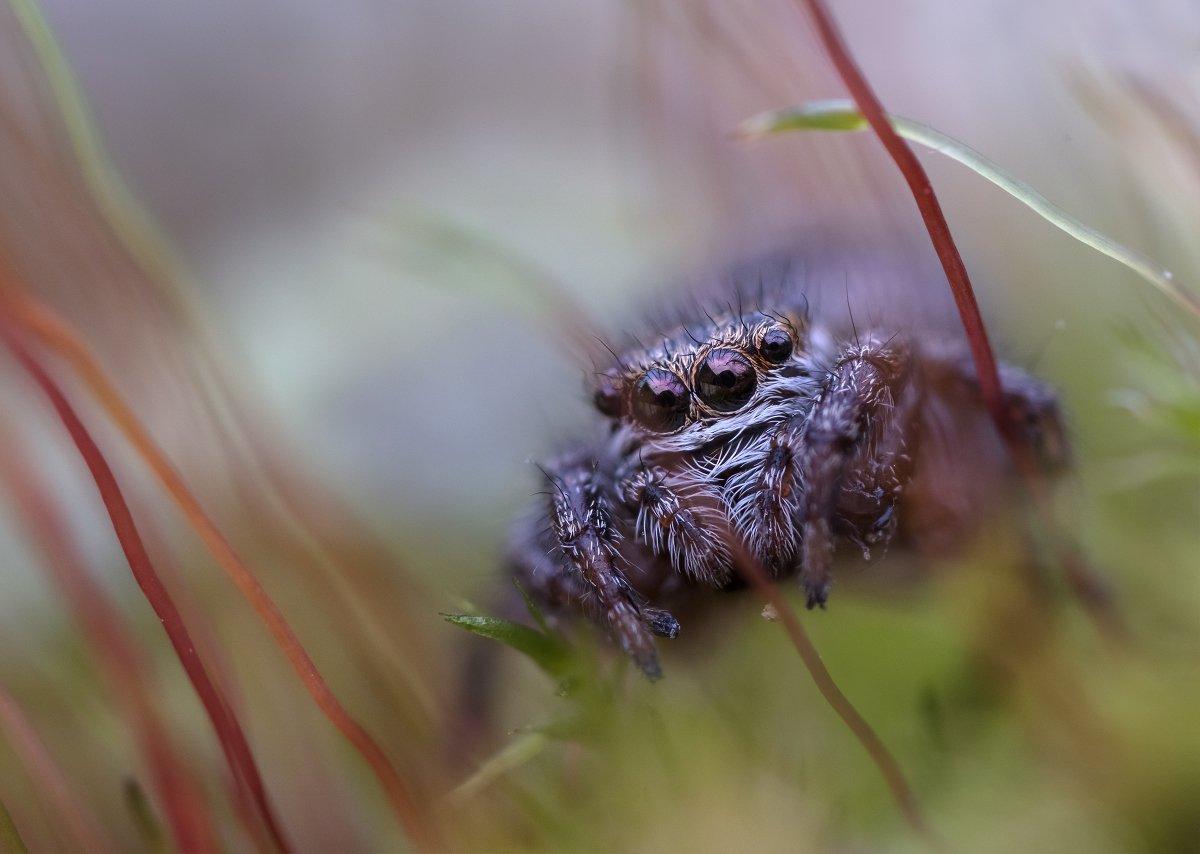паук-скакунчик, Валерия Зверева