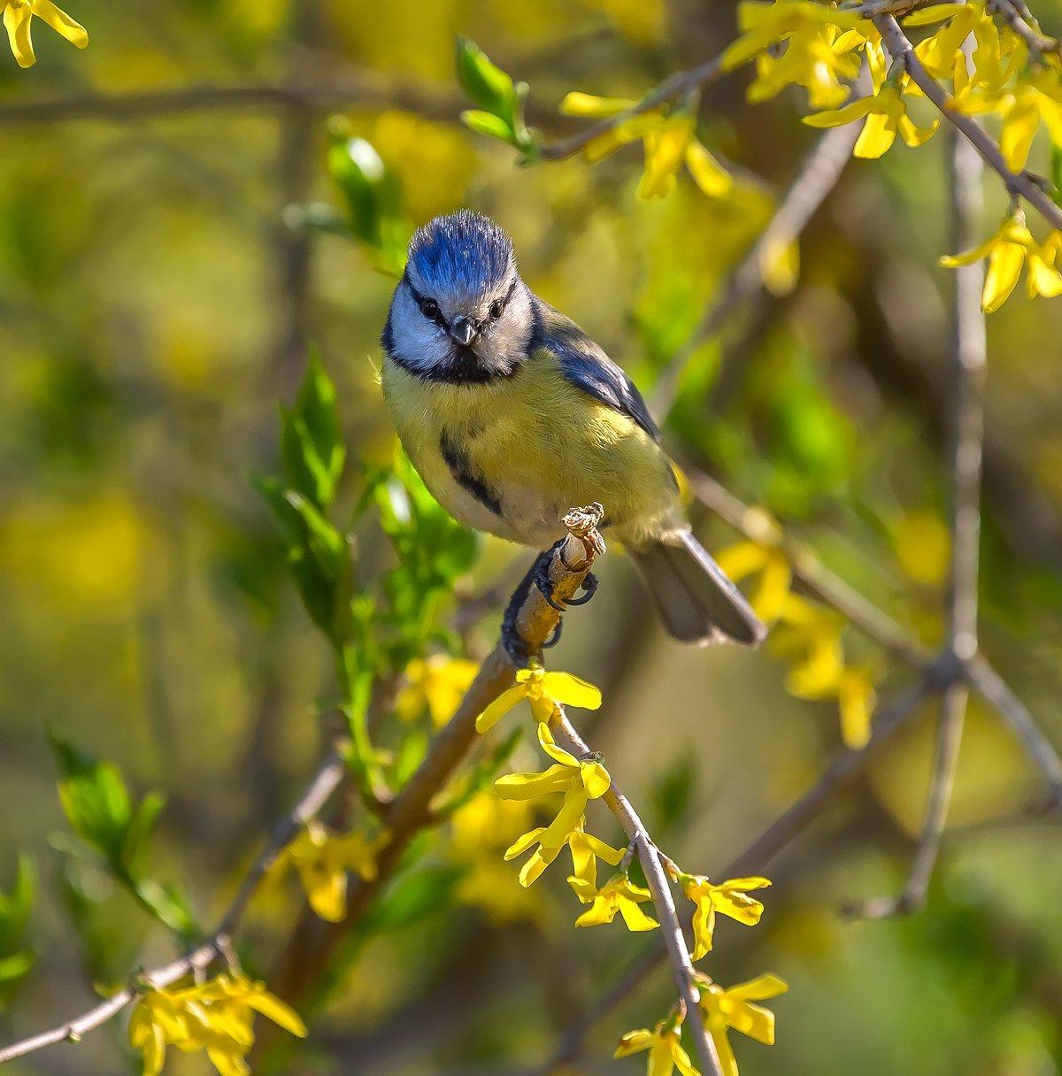лазарёвка, парк, птица, весна, цветы, елагин остров., Лашков Фёдор